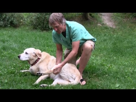 Dog Knee Arthritis: 5 Natural Solutions