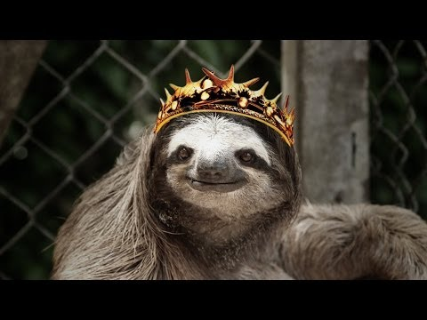 Sloths Sing GAME OF THRONES Theme