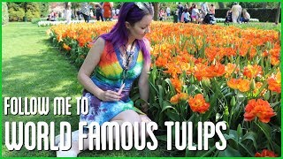 follow me to WORLD FAMOUS TULIPS | Keukenhof Gardens, Holland | Coral Reefer Stoney Sunday by Coral Reefer