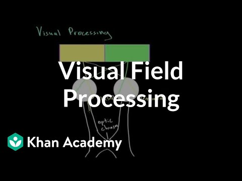 Visual Field Processing Video Khan Academy
