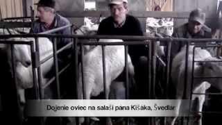 Video Dojenie oviec na salaši pána Kišáka, Švedlár MP3, 3GP, MP4, WEBM, AVI, FLV Mei 2017