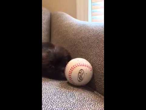 Romeo loves baseball