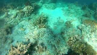 Plongée en Malaisie à Bornéo