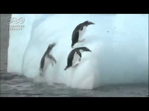 If You Like Penguins, This Video's For You