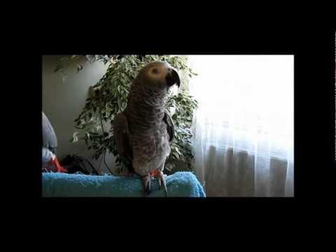 "Epic parrot- ""Predator"": Do It Now! Arnold Schwarzenegger quote"