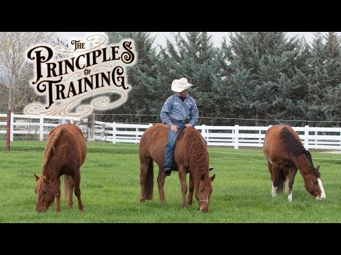 "The Principles of Training Season 1 Episode 2: ""Make Things Easy Part 2"""