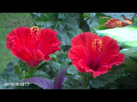 温室に吹く南国の風 奇跡の星の植物館