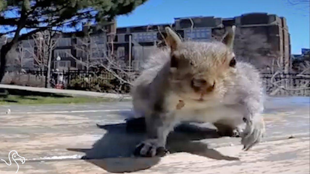 Veverica mu ukrala kameru