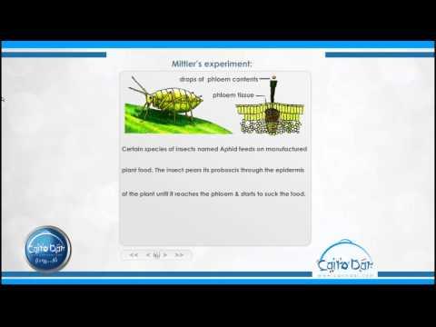 أحياء لغات - الباب الثاثى Transport of manufactured food from the leaf to other parts of the plant