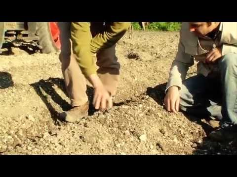 Le désherbage mécanique ou alternatif de la pomme de terre - Episode n°2