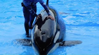 Shocking Accidents at Zoos and Parks by Epic Wildlife