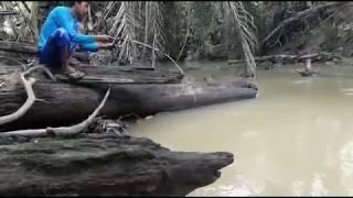 Video Mancing Ikan Baung Di Sungai Keruh MP3, 3GP, MP4, WEBM, AVI, FLV Juni 2018