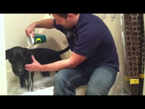 Best Way To Give A Dog A Bath