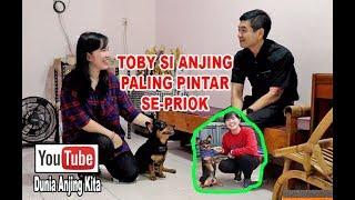 Video Toby Si Anjing Blasteran Terpintar Se-Priok MP3, 3GP, MP4, WEBM, AVI, FLV Juni 2019