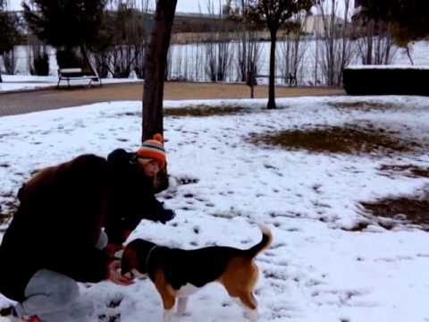 Ver vídeoSíndrome de Down: Sara, Viva la vida