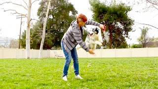 Training a dog to jump through a hoop Video