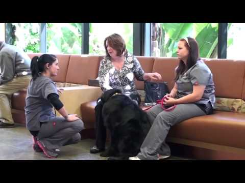 California Veterinary Specialists: Special Care From The Heart