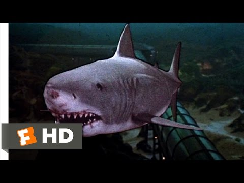 Jaws 3-D (9/9) Movie CLIP - The Exploding Shark (1983) HD