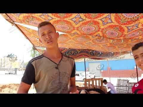 انتشار حظائر بيع الأغنام في طرابلس