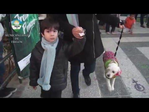 Desfile canino en el Día del Animal