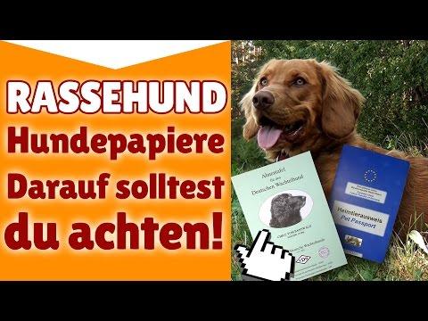 Rassehund Hundepapiere - Auf was du bei Rassehund Hu ...