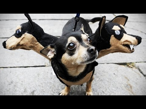 More funny dogs