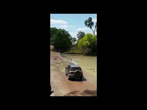 Krokodile in einem Nationalpark im Norden Australiens