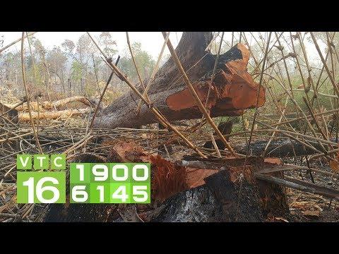 Gần 3 ha rừng vanh đai biên giới Gia Lai bị phá | VTC16 - Thời lượng: 104 giây.