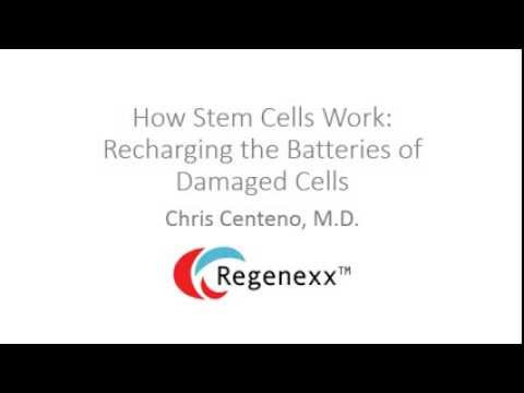 How do stem cells work? The Mitochondrial Battery Recharge