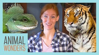 How We Decide Which Animals to Take In by Animal Wonders