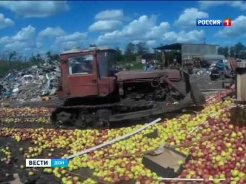 В Матвеево-Курганском районе уничтожили 136 тонн яблок