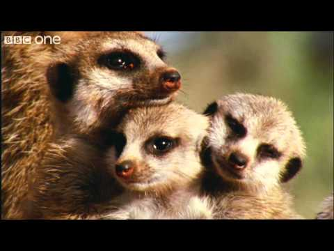 What A Wonderful World With David Attenborough -- BBC One