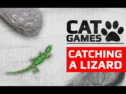 CAT GAMES - CATCHING A LIZARD 60FPS (Entertainment video for cats to watch)