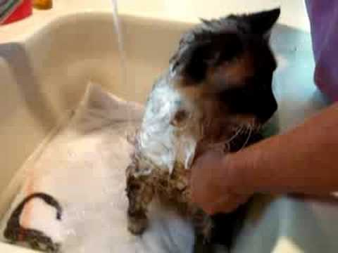 0 How to Bathe a Cat
