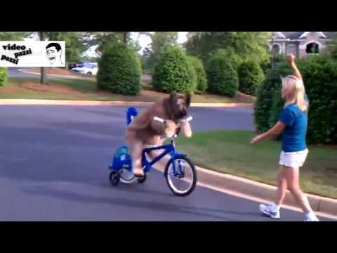 norman - il cane che va in bicicletta