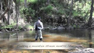 Trout fly fishing near Sydney [VIDEO]