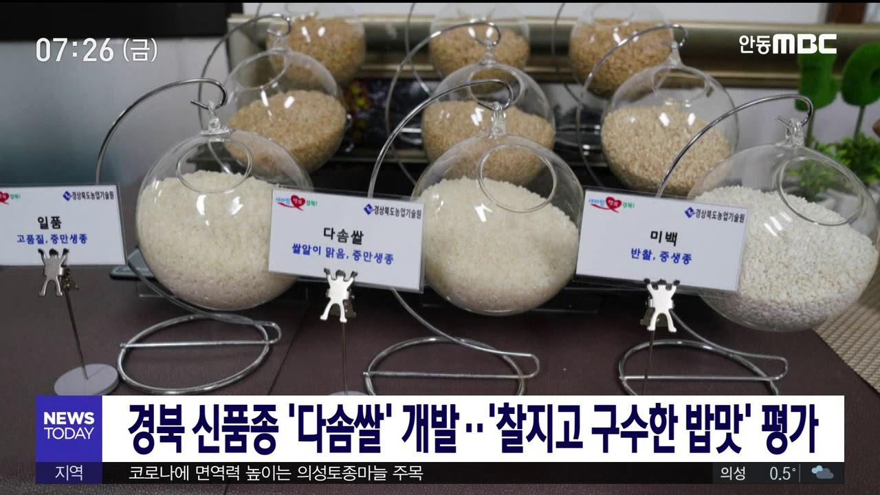 경북 신품종 '다솜쌀' 개발