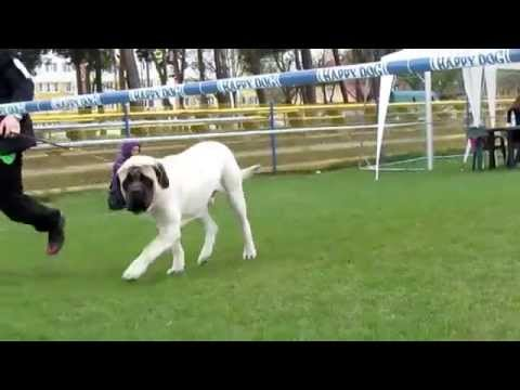 Tringle Dogs Show Poland Grudziądz-Inowrocław-Łódź April- May 2015