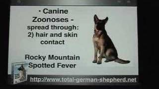 Diseases Passed From Dogs To Humans - Canine Zoonoses