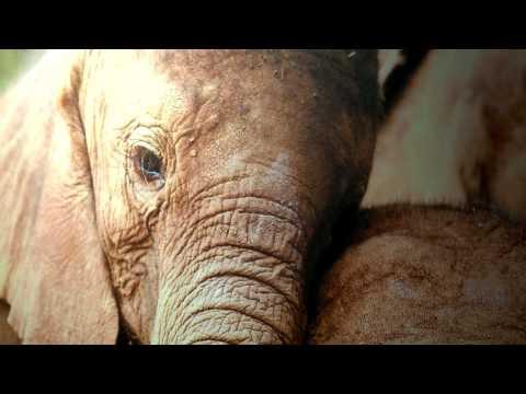 Raising awareness of protecting african elephants