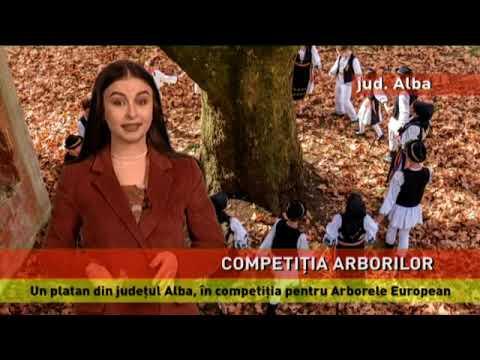 Un platan din județul Alba, în competiția Arborele European al anului 2019
