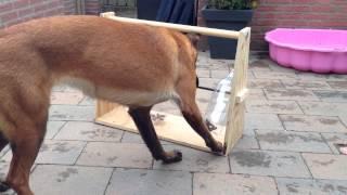 משחק ומתקן האכלה חכם לכלב