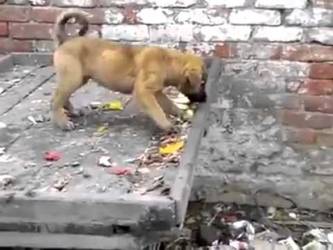Video Monkey and dog comedy video download in MP3, 3GP, MP4, WEBM, AVI, FLV January 2017