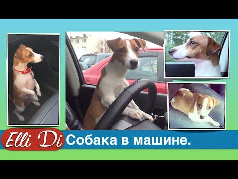 Перевозка собаки в машине. Как перевезти собаку?