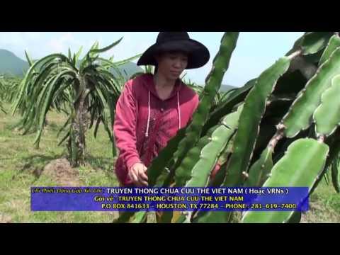 """Phim """"TIẾNG GÕ BO"""" - câu chuyện về cô sinh viên Phương Uyên"""