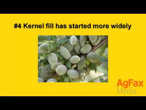 Agfax Tree Crops: 5 Need-To-Know Things – April 13, 2015