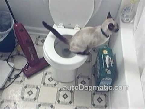 Zeke the Cat Toilet Training