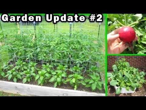 Garden Update 2 – May 20th Raised Bed Container Gardening Vegetable Tomato how to build