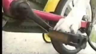 כלבים מצחיקים לצפייה ישירה