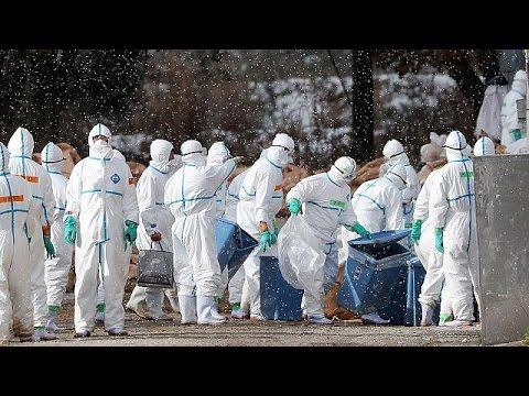 Γαλλία: Σφαγιάζονται χιλιάδες πάπιες και χήνες για τον περιορισμό της γρίπης των πτηνών